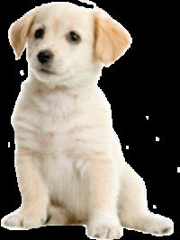cachorro_1