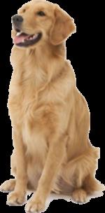 cachorro_3